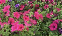 Mini June News.  Plant sale